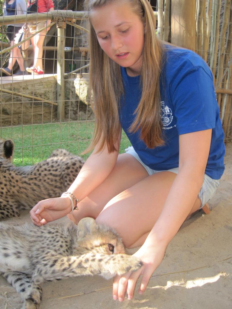 baby-cheetahs